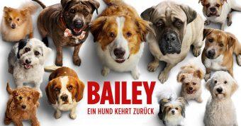 bailey_ein_hund_kehrt_zurueck